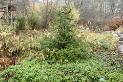Llueva en el bosque y los arbustos ornamentales con un bosque presentado imagenes de archivo