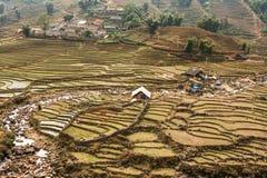 Llueva la estación y la cultura del arroz en las montañas de Sapa Fotografía de archivo