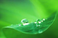 Llueva la gota Foto de archivo libre de regalías