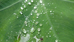 Llueva los descensos Fotos de archivo