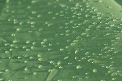 Llueva los descensos en la hoja impermeable verde de la tienda fotos de archivo