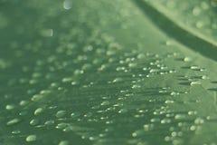 Llueva los descensos en la hoja impermeable verde de la tienda fotografía de archivo