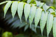 Llueva los descensos en las hojas verdes de la planta en otoño Foto de archivo