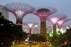 Lluminated futuristiska Supertrees på trädgårdar vid fjärden i Singap Royaltyfri Foto