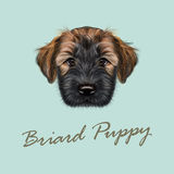 Llustrated Portrait of Briard puppy. Stock Photo