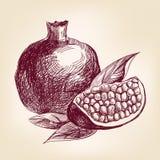 Llustration вектора гранатового дерева плодоовощ нарисованное рукой Стоковая Фотография