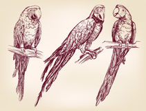 Llustration вектора попугая изолированное комплектом нарисованное рукой Стоковое Изображение