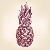 Llustration вектора pineappl плодоовощ нарисованное рукой Стоковая Фотография RF