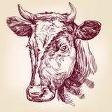 Llustration вектора коровы нарисованное рукой Стоковое фото RF