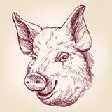 Эскиз llustration вектора свиньи нарисованный рукой Стоковое фото RF