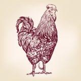 Эскиз llustration вектора цыпленка нарисованный рукой Стоковая Фотография