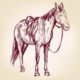 Эскиз llustration вектора лошади нарисованный рукой Стоковые Изображения RF