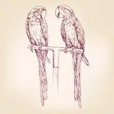 Эскиз llustration вектора попугая нарисованный рукой Стоковое Фото