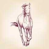Эскиз llustration вектора лошади нарисованный рукой Стоковая Фотография RF
