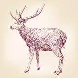 Llustration disegnato a mano di vettore dei cervi Fotografie Stock