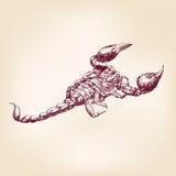 Llustration disegnato a mano di vettore dello scorpione Fotografia Stock