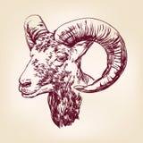 Llustration tiré par la main de vecteur de chèvre Image libre de droits