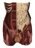 Llustrations scientifiques médicaux d'antiquité humaine de thorax Photographie stock libre de droits