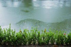 Lluvia Foto de archivo libre de regalías