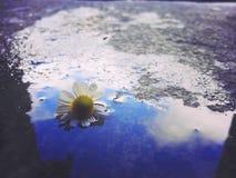 Lluvia Imagen de archivo libre de regalías