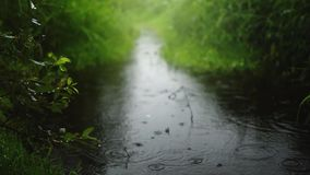 Lluvia caliente del verano en el parque verde resolución 4K Los mejores fondos de la naturaleza almacen de video