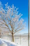 Lluvia congelada Imagen de archivo libre de regalías