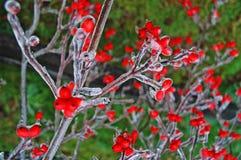 Lluvia congelada Fotografía de archivo