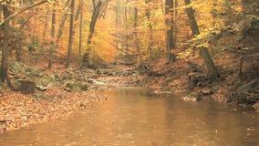 Lluvia de la escena del otoño almacen de metraje de vídeo