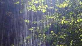Lluvia del bosque almacen de video