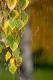 Lluvia del otoño Fotos de archivo