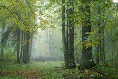Lluvia del rastro del bosque después Foto de archivo libre de regalías