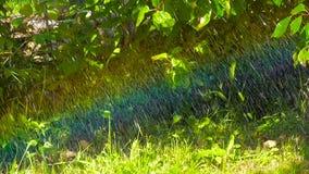 Lluvia del verano con un arco iris almacen de metraje de vídeo