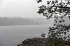 Lluvia del verano en un lago del bosque fotos de archivo libres de regalías