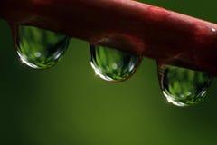 Lluvia drops-02 Imagen de archivo libre de regalías