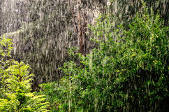 Lluvia en bosque Fotos de archivo libres de regalías