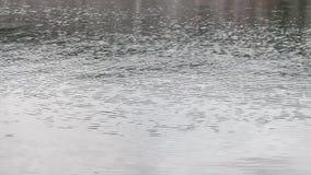 Lluvia en el agua almacen de metraje de vídeo