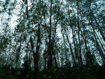 lluvia en el bosque Imágenes de archivo libres de regalías