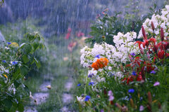 Lluvia en el jardín Fotografía de archivo libre de regalías