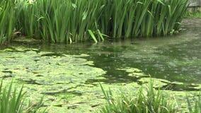 Lluvia en el lago en el parque almacen de metraje de vídeo