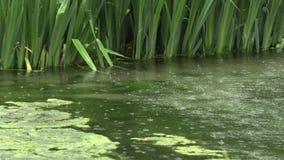 Lluvia en el lago en el parque metrajes