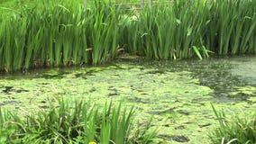 Lluvia en el lago en el parque almacen de video