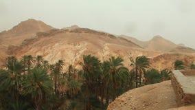Lluvia en el oasis de las palmas datileras Sahara Tamaqzah Tunisia almacen de video