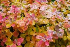 Lluvia en las hojas I Fotos de archivo