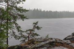 Lluvia en un lago del bosque Foto de archivo
