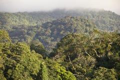 Lluvia Forest Costa Rica de Monteverde Fotografía de archivo libre de regalías