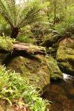 Lluvia Forest Creek Foto de archivo libre de regalías