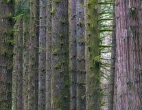 Lluvia Forest North West Imagen de archivo libre de regalías