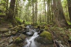 Lluvia Forest Pacific North West Fotos de archivo
