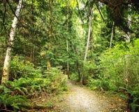 Lluvia Forest Path en un día de verano caliente Imágenes de archivo libres de regalías