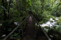 Lluvia Forest Stream Crossing Fotografía de archivo